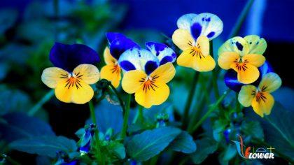 hoa-canh-buom-xanh