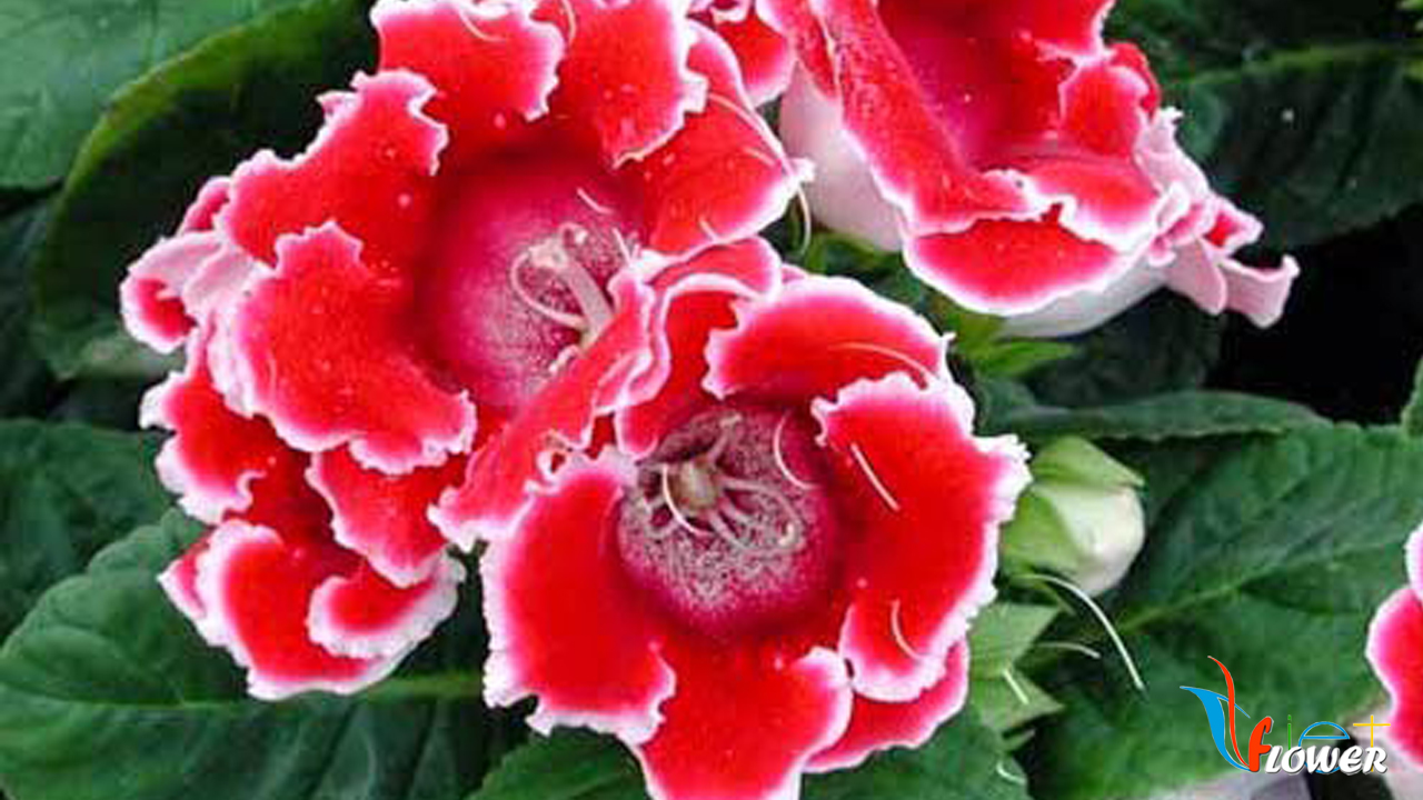 Hoa chuông