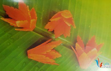 Tia hoa từ cà rốt